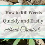 How to Kill Weeds Quickly and Easily without Chemicals
